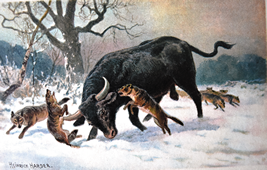 Aurochs fighting with wild wolves