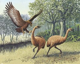 Painting of a Haast's eagle attacking moas