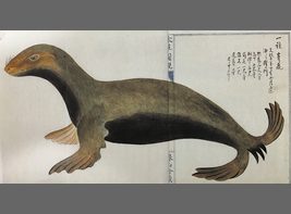 Japanese sea lion which is painted in Edo era