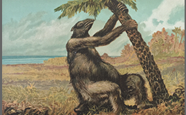 Vintage drawing of Megatherium in 19 century②