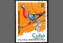 Passenger pigeon on postal stamp