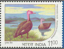 Pink-headed duck on an Indian stamp