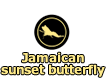 Jamaican sunset butterfly