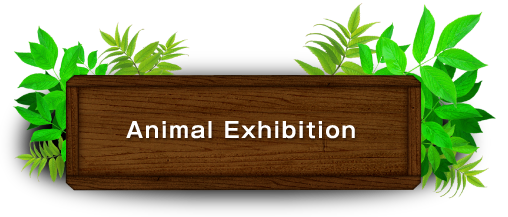 Animal Exhibition